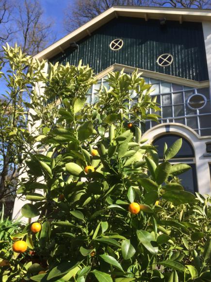 Oranjerie-Sinas2